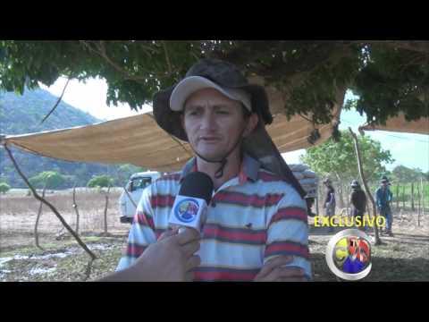 Santana dos Garrotes se destaca na produção de batata doce: Assista!