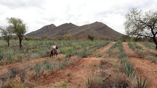 PREMIERE FALL 2020 Pati's Mexican Table Season 9 -Sonora: Mexico's Great Frontier - Official Trailer