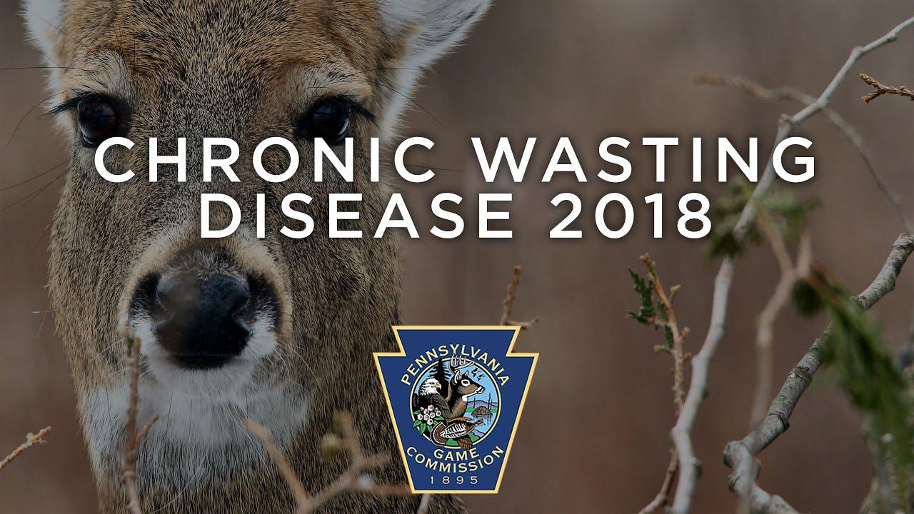 Pennsylvania hunters warned about 'zombie deer disease'