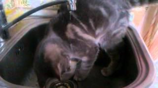 Глупая кошка фывапролдж