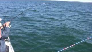 How to Catch Bluefish, Bigger Bluefish, and More Bluefish - Saltwater Bluefish Fishing