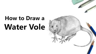 How to Draw a Water Rat with Pencils [Time Lapse]