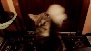 С днем рождения кошка Соня 6 лет