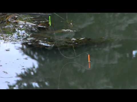 Solhampton Fishery   Pellet