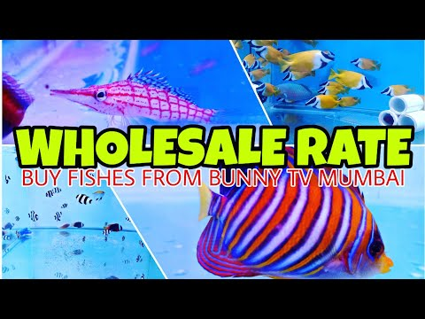 Wholesale Rate Marine Fishes Buy Now From Bunny Tv Mumbai