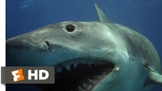 Jaws: The Revenge (4/8) Movie CLIP - The Shark Hunts Michael (1987) HD