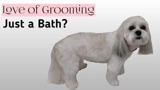 Offering just a Bath? | Enjoy the vided! Grooming Products I Love ❤...