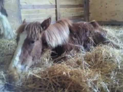 Ohio SPCA: Danny & Little Ben, Horse Rescue