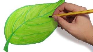 COMO DIBUJAR HOJAS DE ARBOLES PASO A PASO: Dibujos faciles para niños a color
