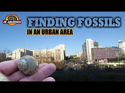 Finding Fossils in an Urban Area