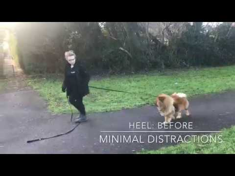 Incredible Chow Chow Obedience | Off-Leash K9 Training London