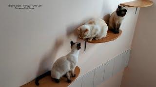 Котики любят гулять по полочкам и отдыхать на подоконниках! Тайские кошки - это чудо! Funny Cats