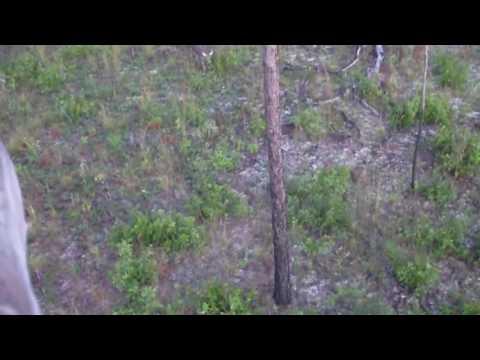 croom wma 8   big hammock wildlife management area reviews tips  u0026 activities      rh   parkvisitor