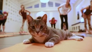 Cat Yoga  channel your inner meowmaste