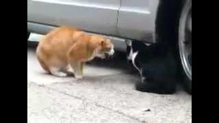 Коты убийцы
