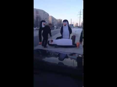 Пингвины переходят дорогу   Подборка видео от 09 12 2013