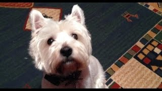 The Mad Westie