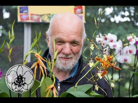 Download TUTORIAL: come tagliare lo stelo sfiorito dell'orchidea Phalaenopsis