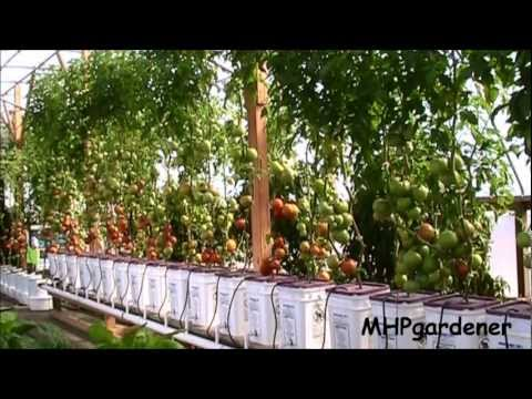 GMO Seeds - Your Garden and Your Food - Let's Talk About It