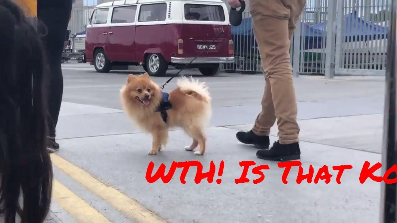 Logan New Pauls Breed Dog