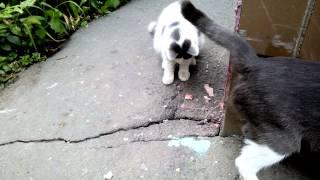 Котенок наелся и начал играть крабовой палочкой