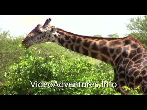 Tarangire National Park Tanzania East Africa