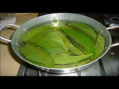 Natural Remedy For Dengue Fever Is Guava- How To Use