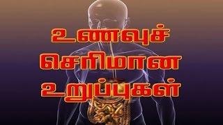 உணவுச் செரிமான உறுப்புகள் - digestive - Human Body System and Function