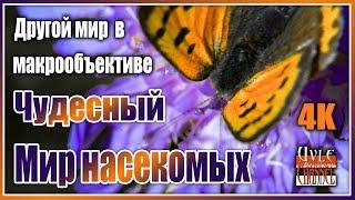 Чудесный мир насекомых.