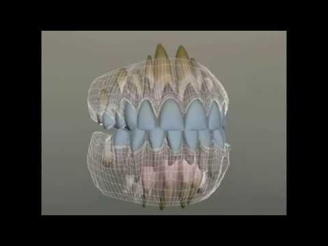 Порядок прорезывания и появления молочных зубов, как они