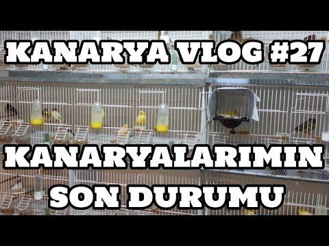 Hobihanem - Kanarya Vlog #27 (Kanaryalarımın Son Durumu) [20.06.2017]