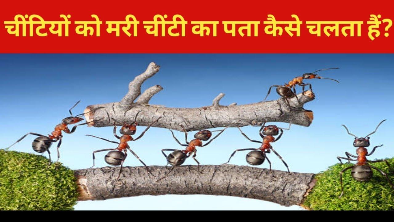 Chiti Ki Kahani | What Happens When An Ant Dies | Dead Ant