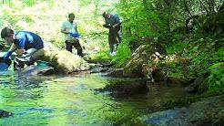 Popular Dahlonega & Chestatee River videos