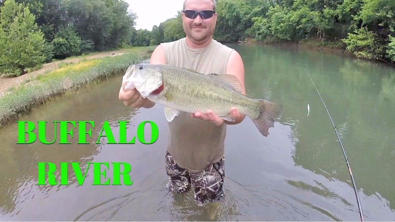 Wading the buffalo river for smallmouth and largemouth for Arkansas fishing license