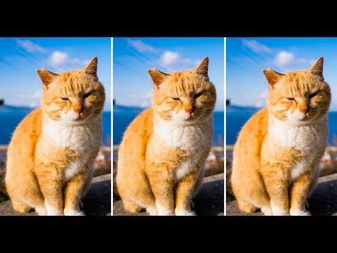Best Funny Cat Fails June 2019
