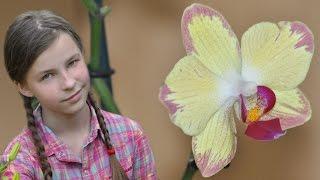 Орхидея ароматный попугай в посылке ㋛(Дата съемки 16.06.16 Ароматная орхидея фаленопсис Pappagayo или Bee Sting Подписаться на новые видео https://www.youtube.com/user/BAGIR..., 2016-08-09T19:03:35.000Z)
