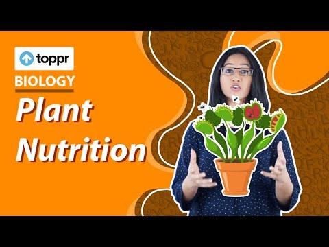 Class 7 Science : Biology | Plant Nutrition (CBSE, NCERT)