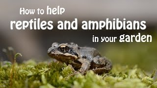 The Wildlife Garden Project | How to help reptiles and amphibians in your garden