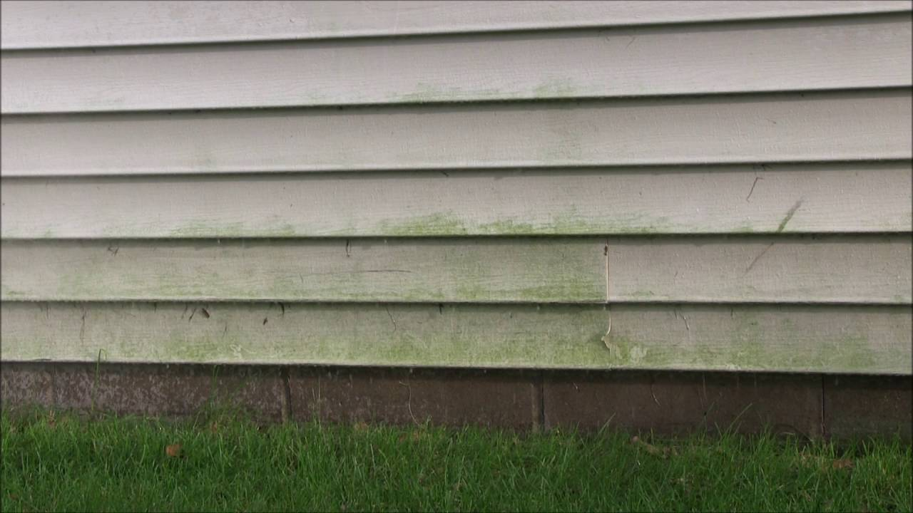 How to clean mold off walls - Cleaning Mildew Mold From Vinyl Siding