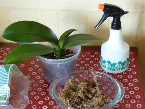 #Мох #сфагнум для орхидей. Как применять.