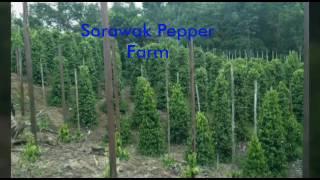 Sarawak Pepper Farm