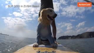 投稿者:ケンタリーさんコメント いつも逗子海岸で子供達と愛犬と一緒に...