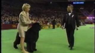 The 2004 Westminster Kennel Club  Josh the Newfoundland