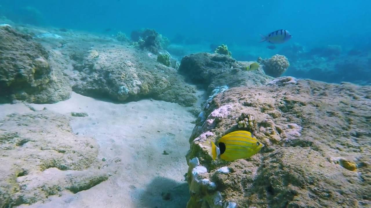 Snorkeling Tunnels Beach Kauai Hawaii