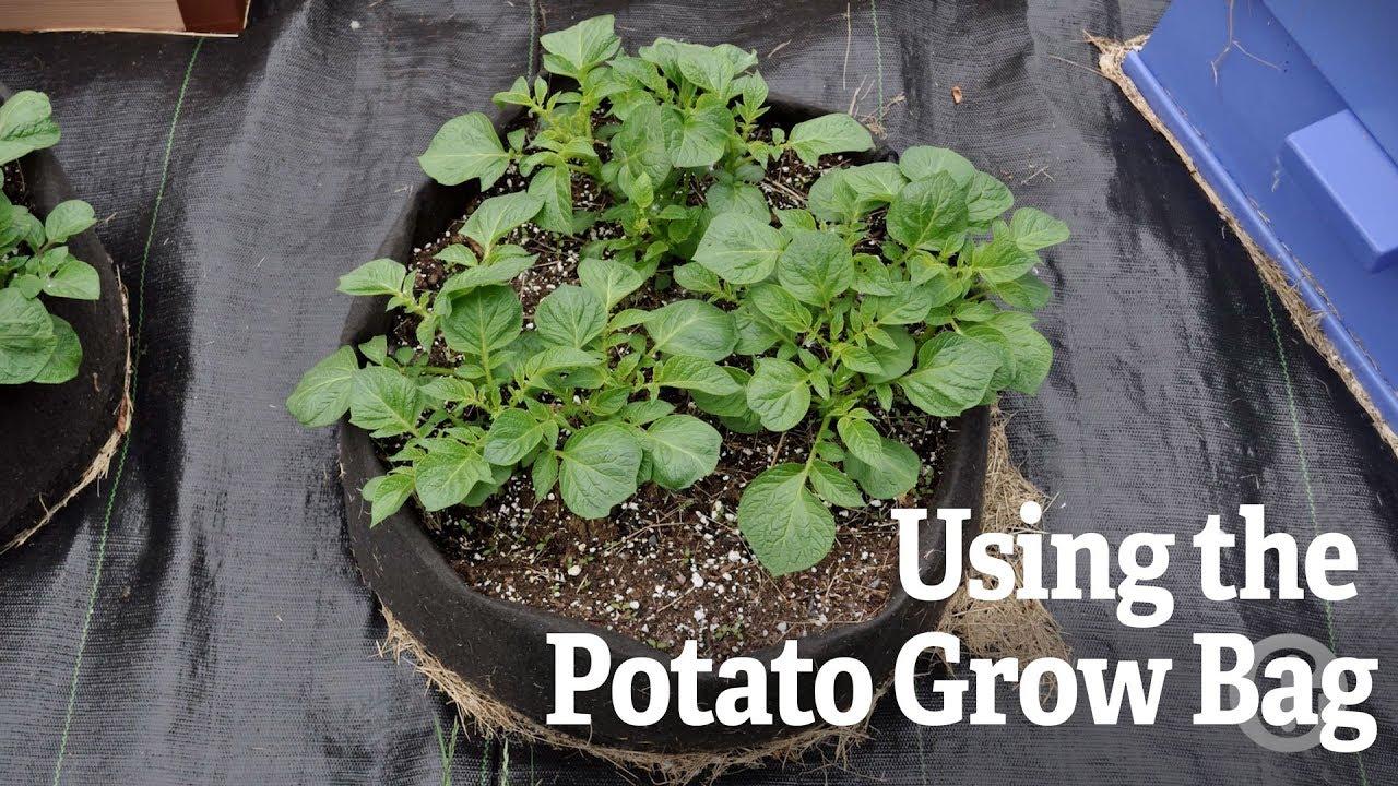 Using The Potato Grow Bag
