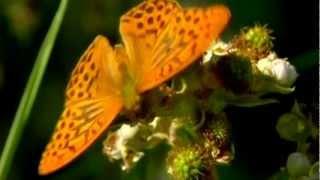 Беззаботной бабочкой улетает наше детство....wmv