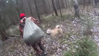 Охота на волков с собаками 2017