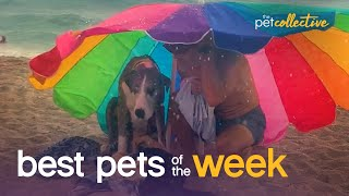 The Worst Beach Day Ever!!!!| Best Pets of the Week