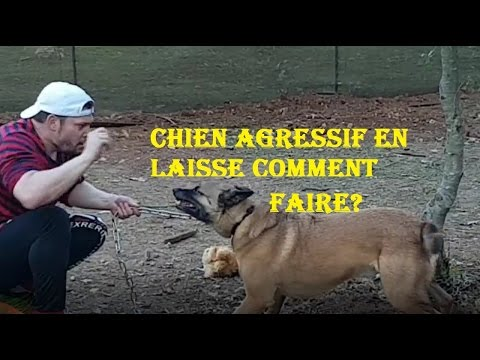 VIDEO CHIEN PINSCHER AGRESSIF DANS LA RUE/EDUCATION/ERI