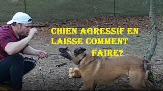 COMMENT ÉDUQUER MON CHIEN DE RACE BERGER BELGE MALINOIS AGRESSIF EN LAISSE (11) ERIC TRAMSON